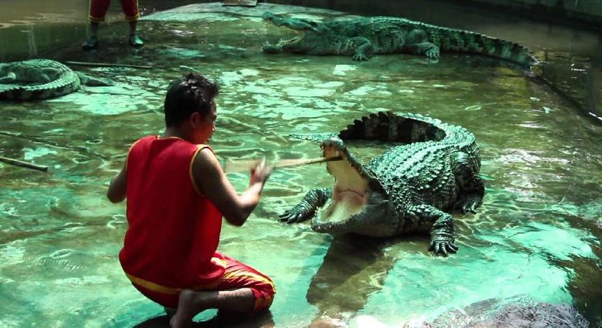 Crocodile Farm picture